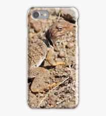 Desert Collared Lizard iPhone Case/Skin