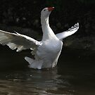 Flapping goose by turniptowers