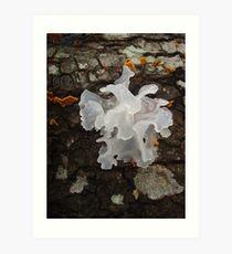 Pretty, frilly fungus (Tremella fuciformis) Art Print