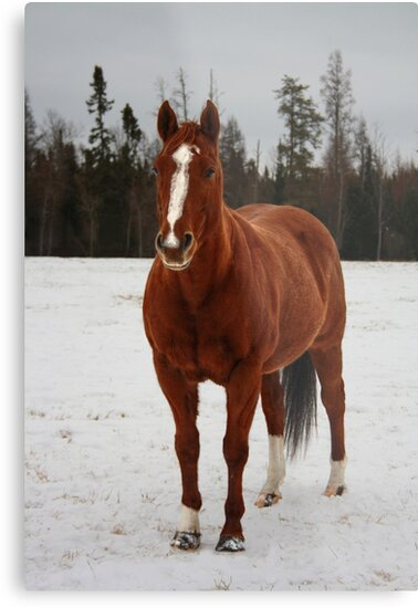 Portrait of a Horse by Ashlee White