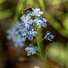 Forget Me Not II by Ashlee White