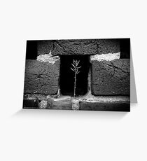 A Single Plant Growing Out Of The Old Red Brick Wall   Upper Brookville, New York  Greeting Card