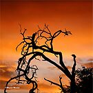 THE LONELY TREE by Magriet Meintjes