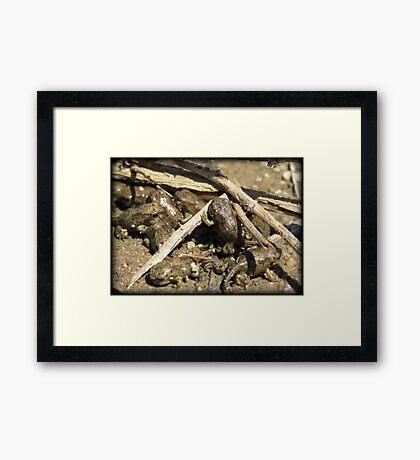 Toad-letts Framed Print