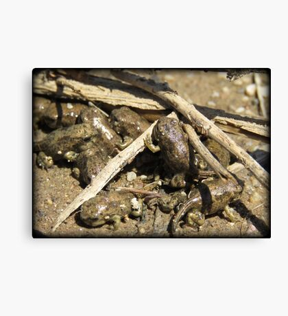 Toad-letts Canvas Print