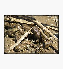 Toad-letts Photographic Print