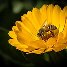 A Very Busy Bee by Clare Colins