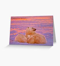 Polar family sunset Greeting Card