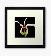 Tiny Dancer - A New Perspective on Orchid Life Framed Print