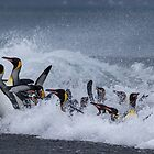 King Penguins Arrive by Steve Bulford