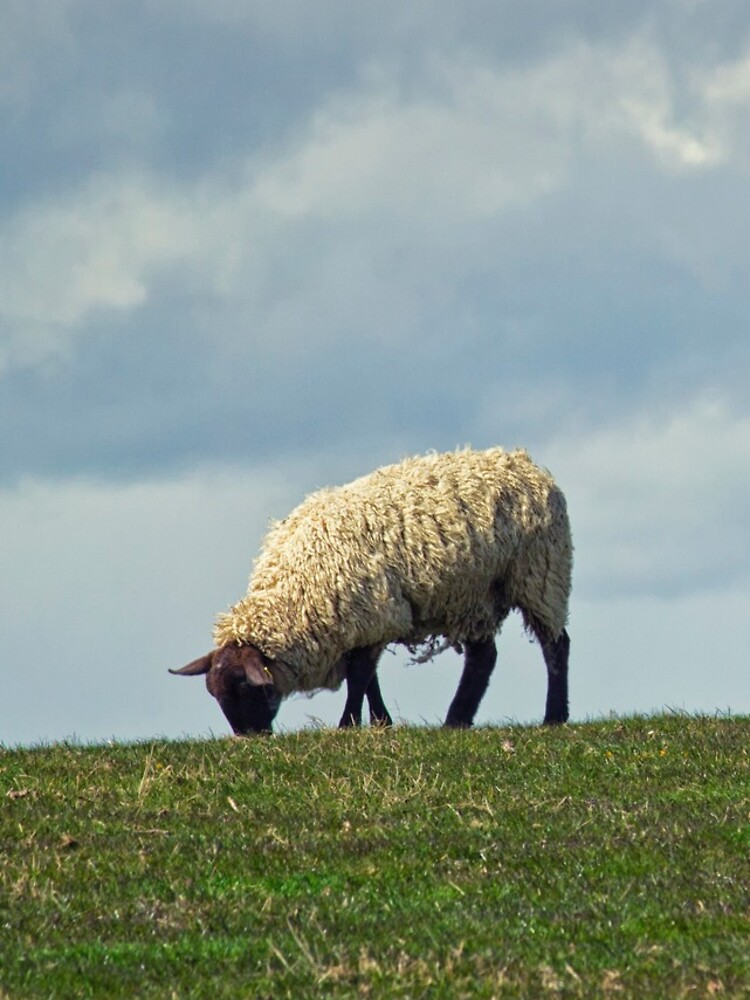 Sheep on the Hill by InspiraImage