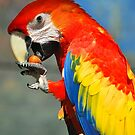 Mr Macaw by Penny Smith
