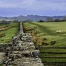 Rural Landscapes by mcstory