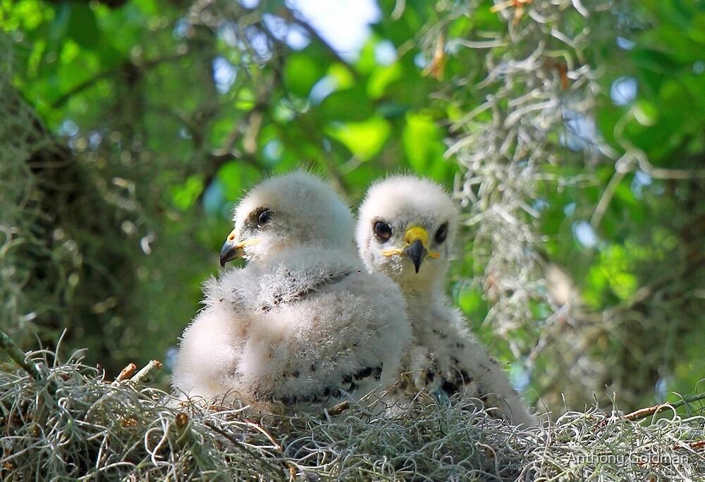 Fluffy little birds!! by jozi1