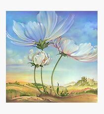 In the Half-shadow of Wild Flowers Photographic Print