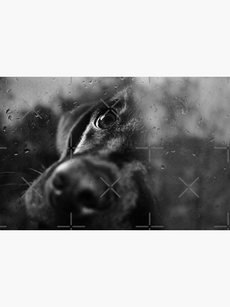 dog by Ingz