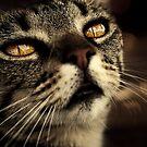 cat by Ingrid Beddoes
