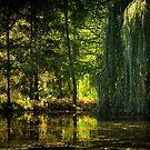 The Quiet Pond by Johanne Brunet