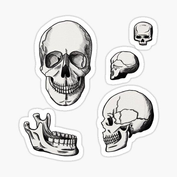 Anatomy Studies - Skulls Sticker