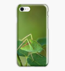 Young Bush-Cricket 1 iPhone Case/Skin
