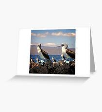 Blue footed bobbies/Galapagos Greeting Card