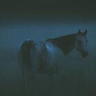 Misty Evening by Betty MacRae