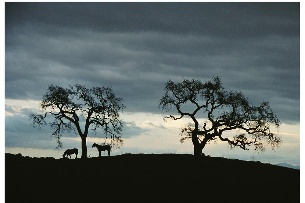 horses under trees by David Chesluk