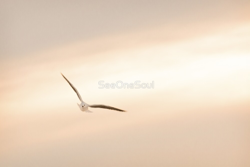 Seagull Tranquility by SeeOneSoul