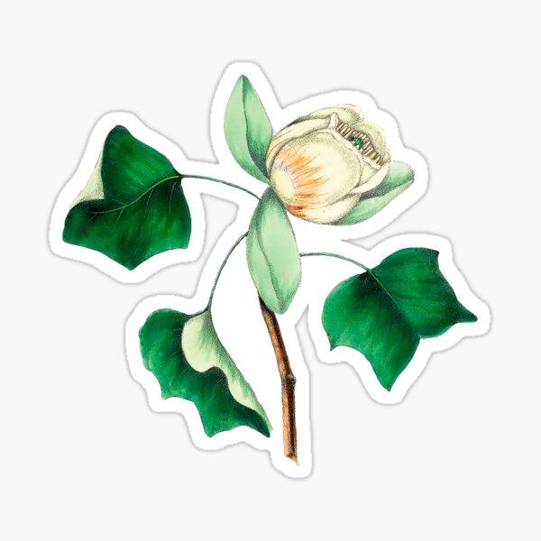 Tulip Poplar Flower Sticker