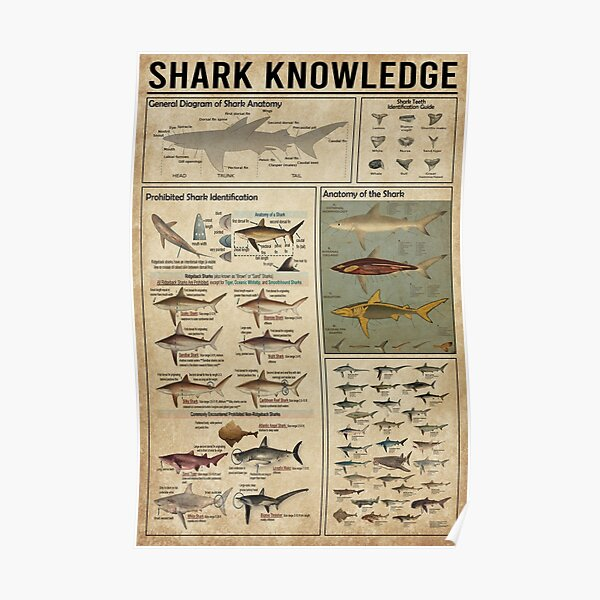 Shark knowledge  Poster