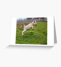 Baby goat jumping Greeting Card