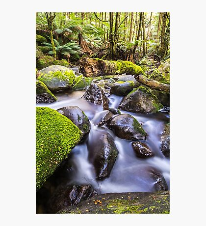 Taggerty River Photographic Print