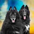 Belgian Sheepdog Calendar by wolfshadowphoto