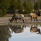 Spring Reflections #2 by Ken McElroy