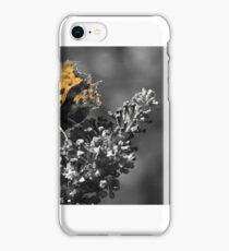 Butterfly on Buddleja iPhone Case/Skin