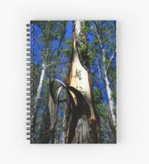 View from below of a beautiful Karri tree Spiral Notebook