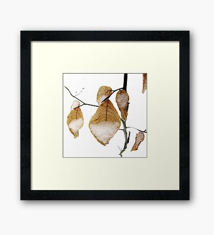 Beech Tree Leaves in Snow Framed Print
