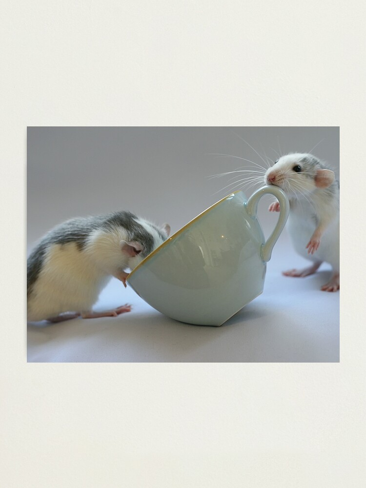 Alternate view of Coffee-time Photographic Print