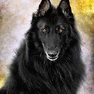 Belgian Sheepdog (Groenendael & Tervuren) Calendar by wolfshadowphoto