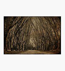 woodland trees Photographic Print