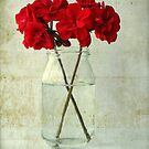 Red Geraniums by Evelyn Flint