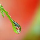 Garden Waterdrop  2  ' Apples'   by relayer51