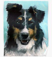 Ozzie - dog portrait Poster