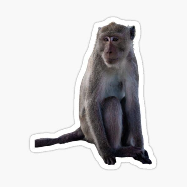 Monkey Sticker - Save the Animals  Sticker