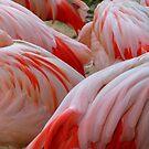 Flamingo Backs by WildestArt