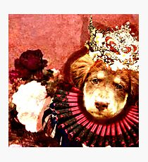 Princess Aussie Photographic Print