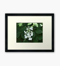 White Flowers Against Greenery Framed Print