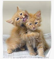 Orange Tabby Kittens Poster