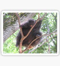 Porcupine in Tree Sticker