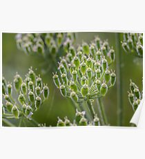 Green nature Poster